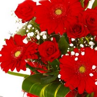 Duo d'amour gros bouquet gerberas